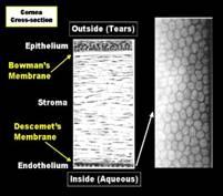 wpid-cornea-other_clip_image006-2010-10-4-09-06.jpg